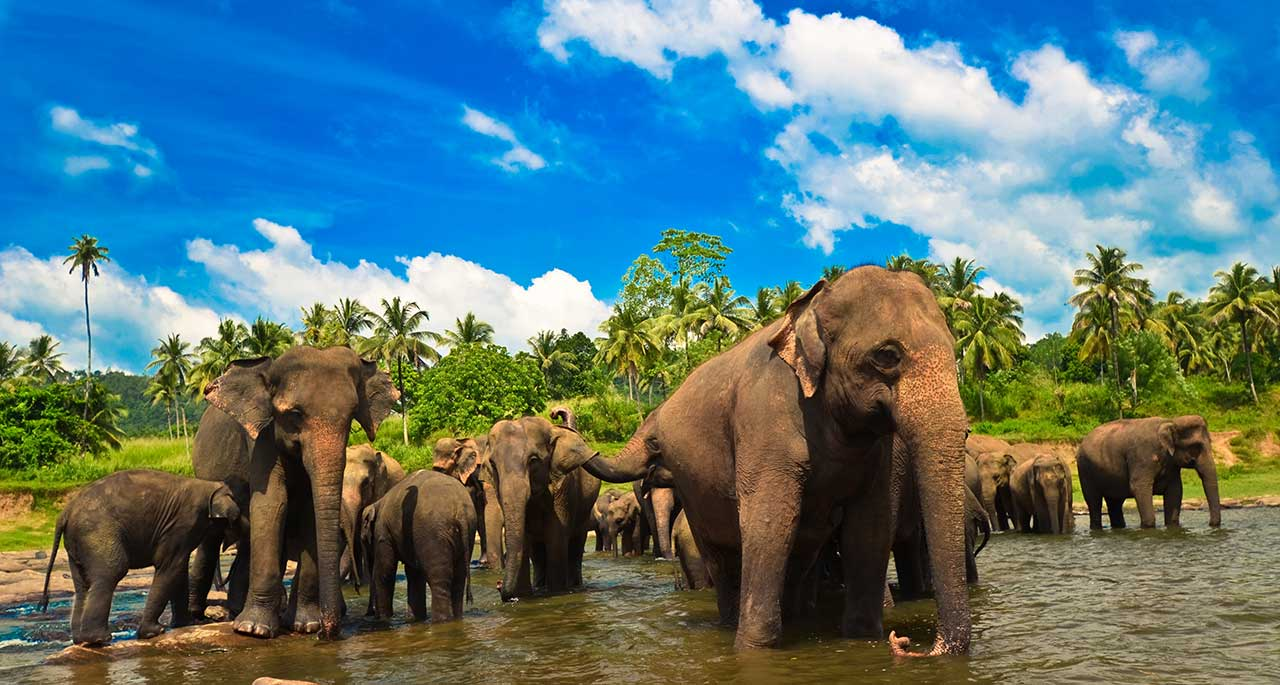 What Are The Top 7 Places To Visit In Sri Lanka By 2016