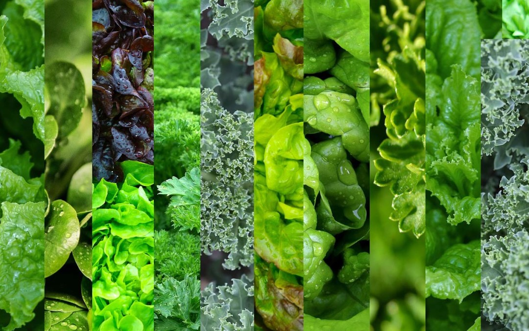 how to cook mustard greens without meat